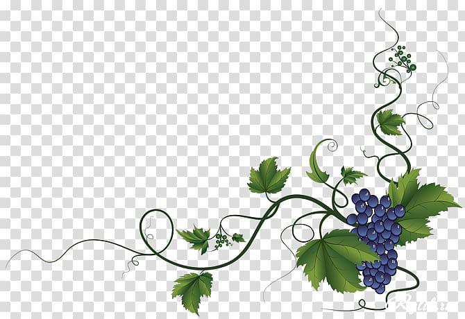 Common Grape Vine Wine Grape leaves Decorative Borders.