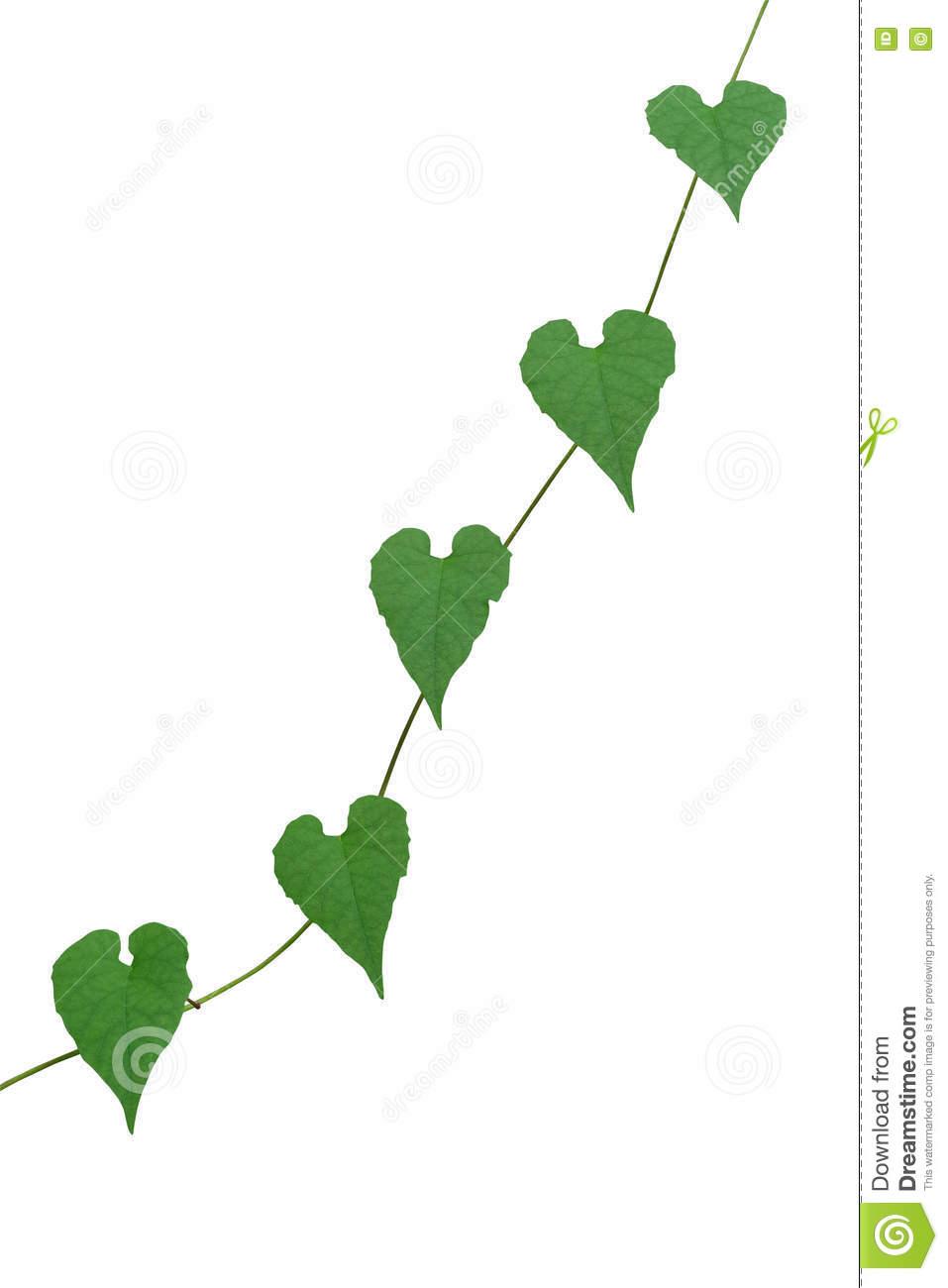 Chain Of Heart.