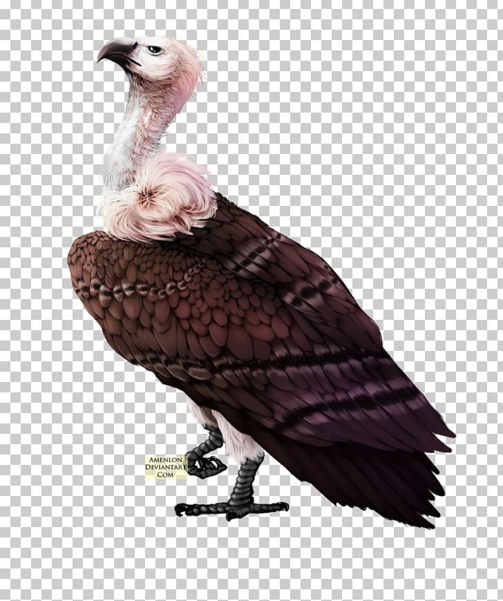 Bird Turkey Vulture PNG, Clipart, Animals, Beak, Bird, Bird.