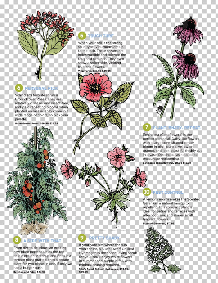 Perennial plant Foraging & Feasting: A Field Guide and Wild.