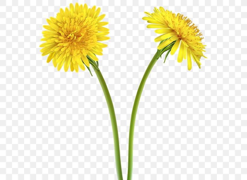 Dandelion Yellow Flower Clip Art, PNG, 566x600px, Dandelion.