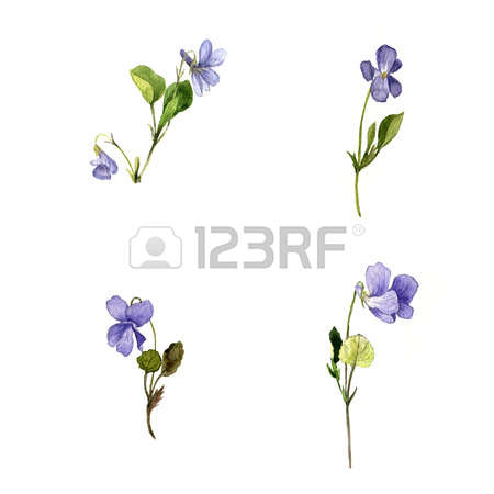 30,810 Wild Blue Stock Illustrations, Cliparts And Royalty Free.