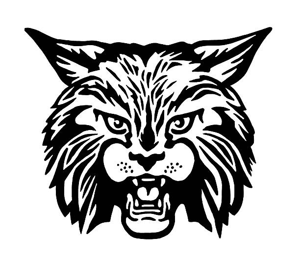 Best Wildcat Mascot Illustrations, Royalty.