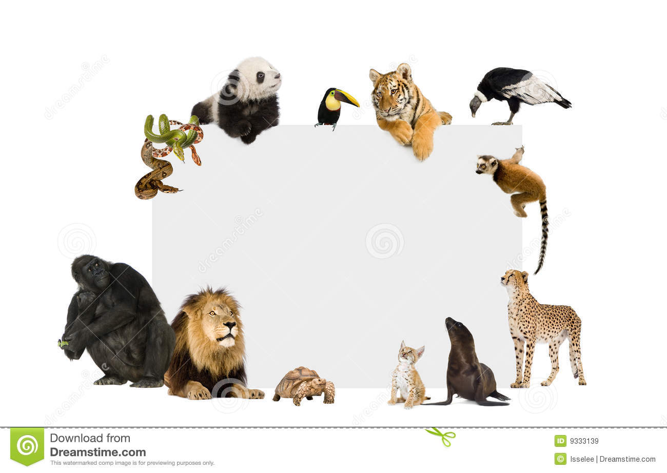 Wild Animal Stock Photos, Images, & Pictures.