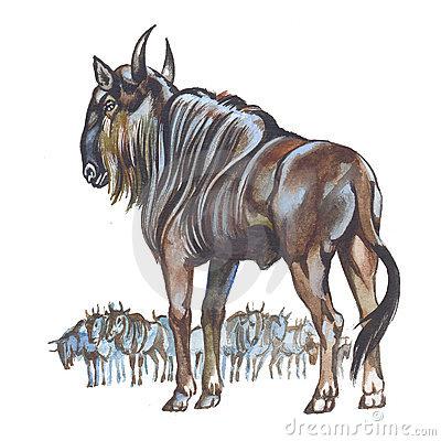 Blue Wildebeest Stock Illustrations.