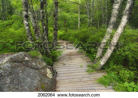 Stock Photo of Forest Floor Details And Hiking Details.