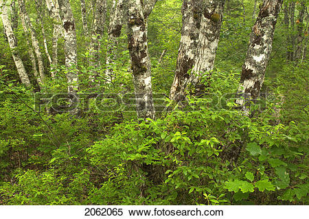 Stock Image of Forest Floor Details.