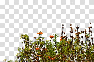 Wildflower transparent background PNG cliparts free download.