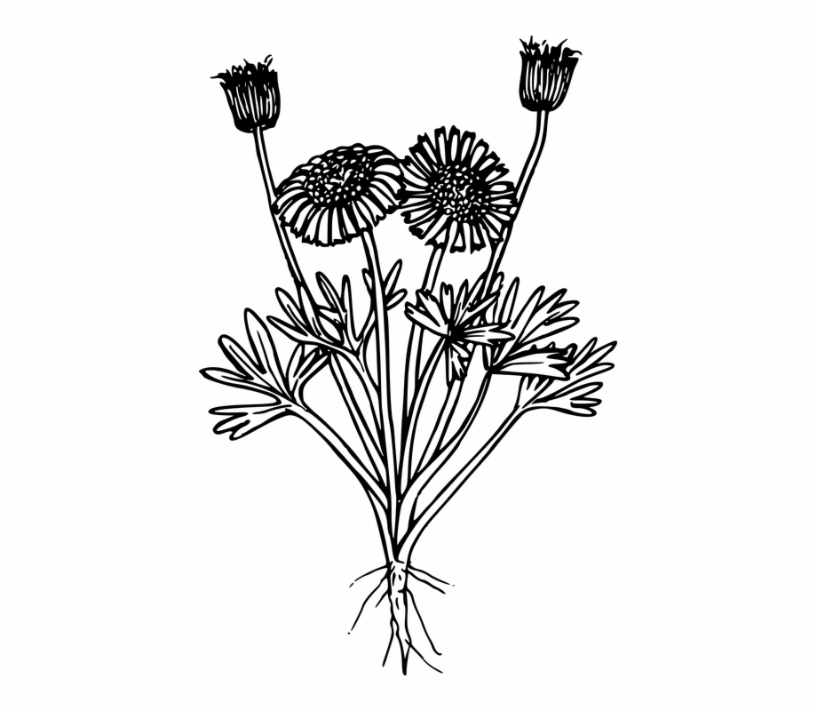Free Wildflower Clipart Black And White, Download Free Clip.