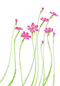 Wildflower Clip Art and Stock Illustrations. 1,926 wildflower EPS.