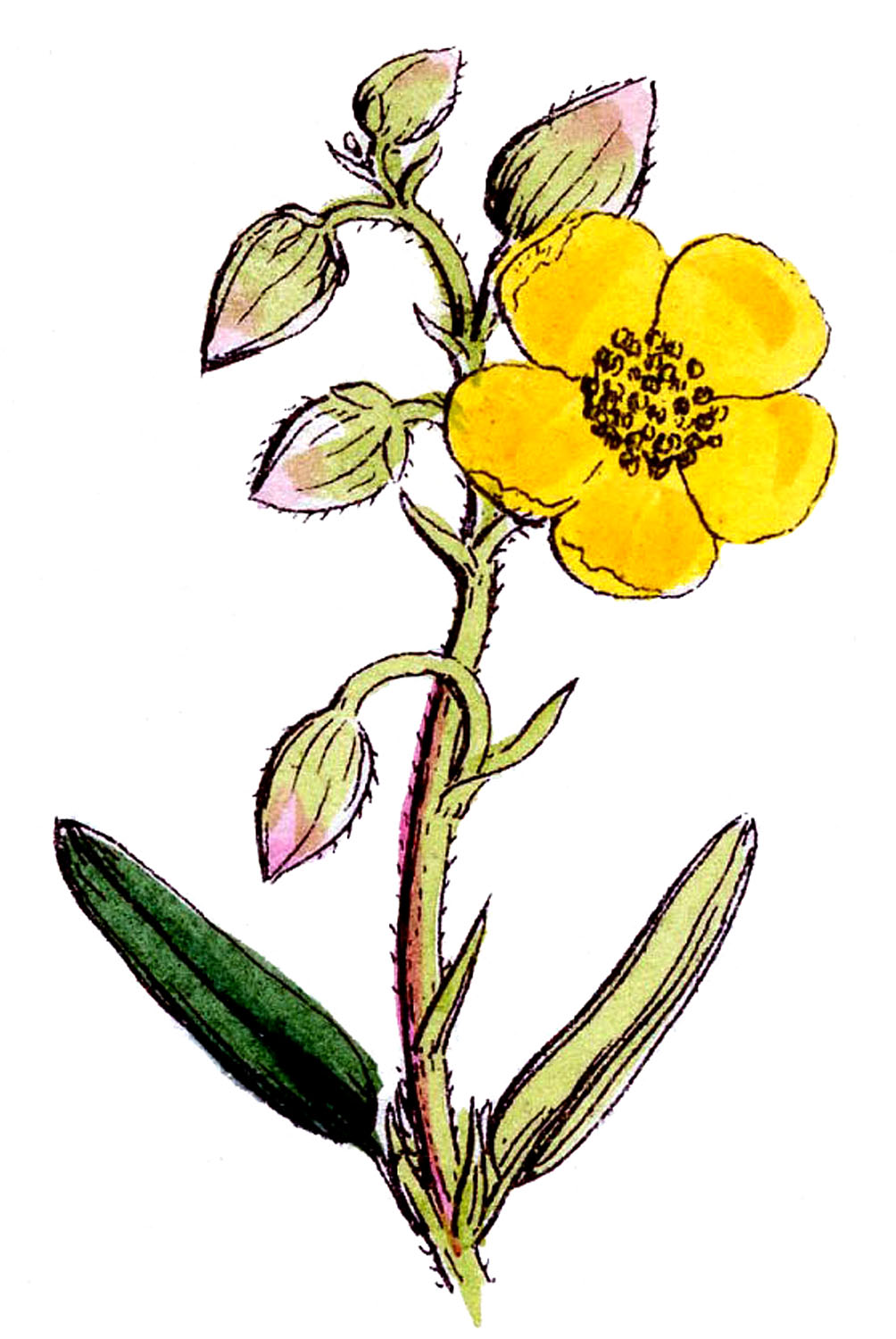 Wildflower Clipart.