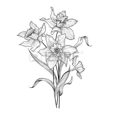9,987 Wildflower Stock Illustrations, Cliparts And Royalty Free.