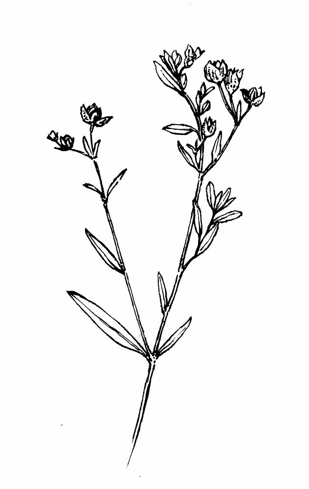 vintage botanical design tattoo.
