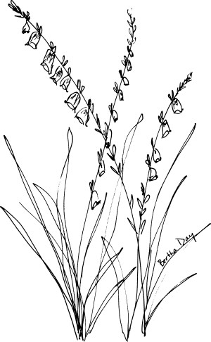 wildflower clipart black and white #18