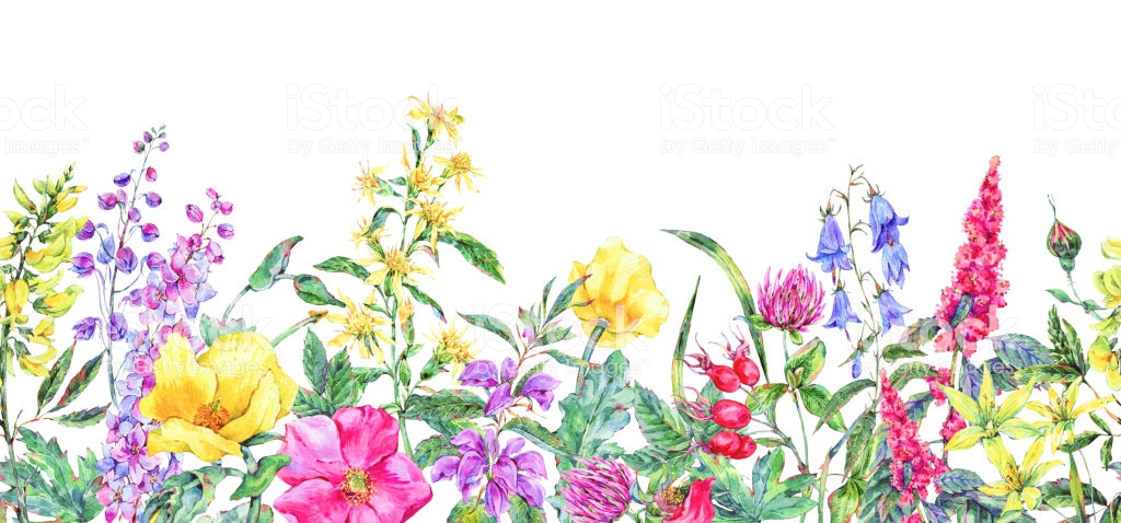 Watercolor Summer Medicinal Flowers Wildflowers Botanical Seamless.