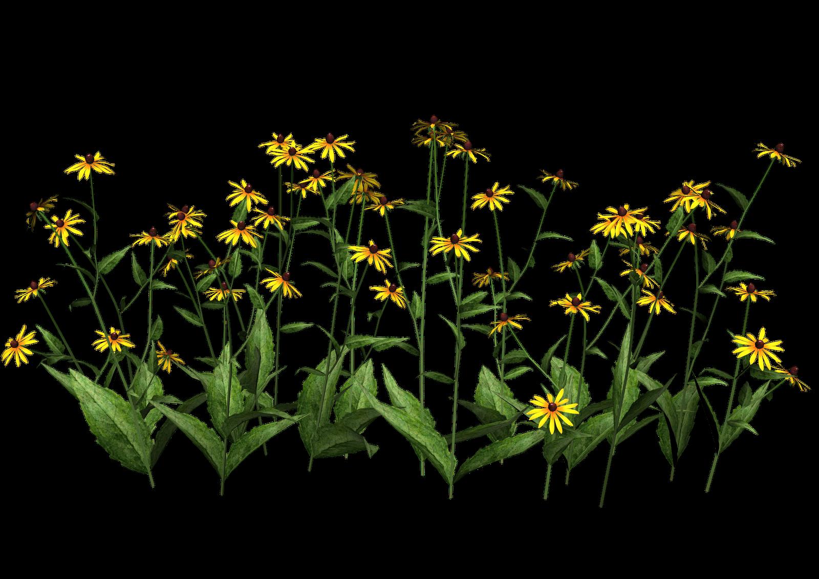 Plant Wildflower Clip art.