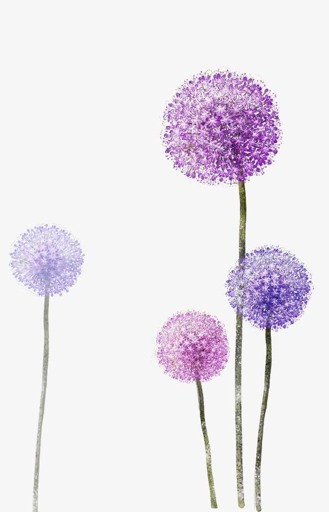 Purple Dandelion, Flower, Purple PNG Transparent Clipart.
