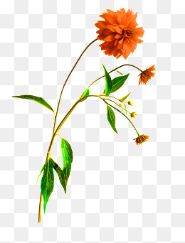 Download Free png Wildflowers Png, Vector, PSD, and Clipart.