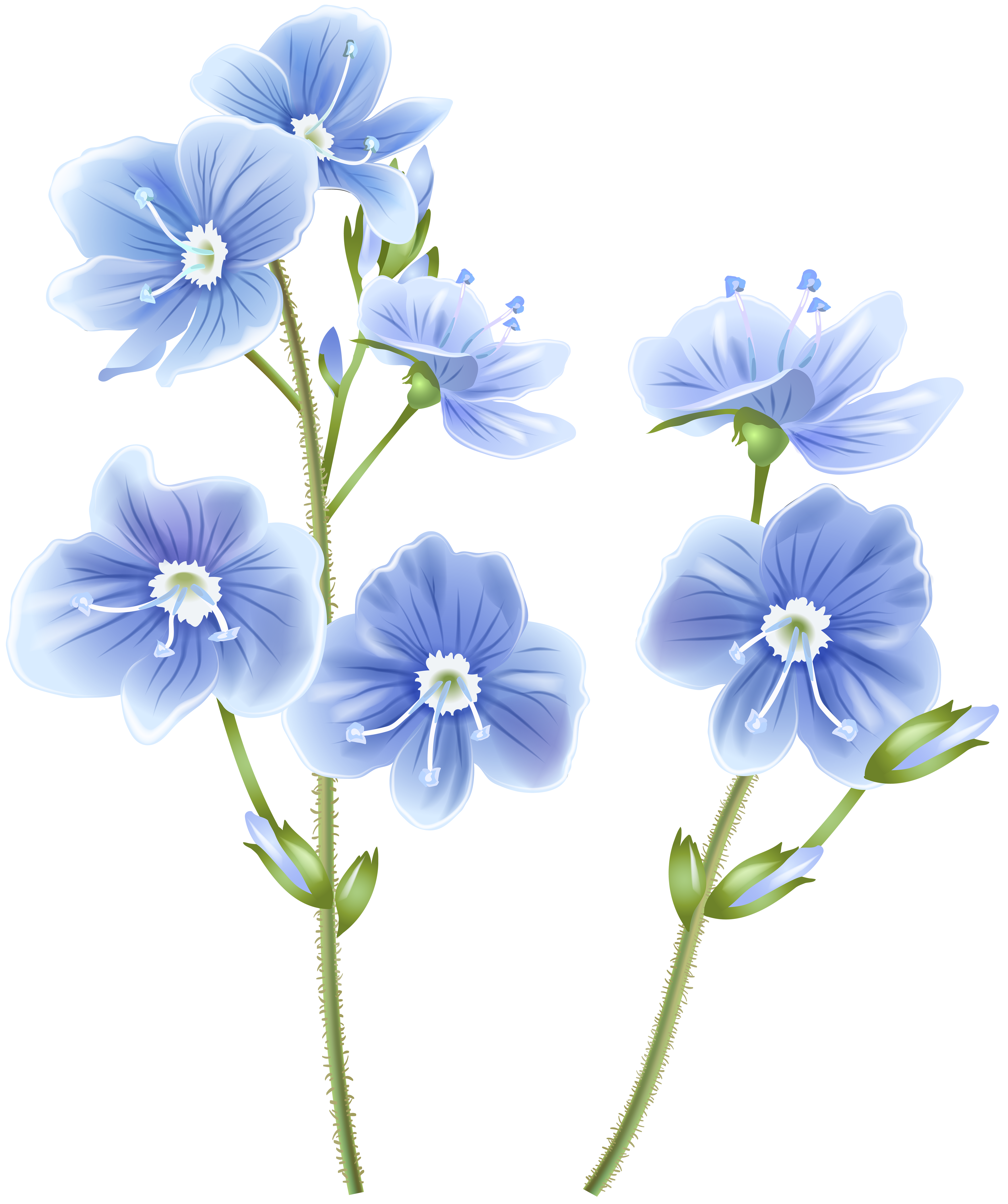 Wildflower Blue PNG Clip Art Image.