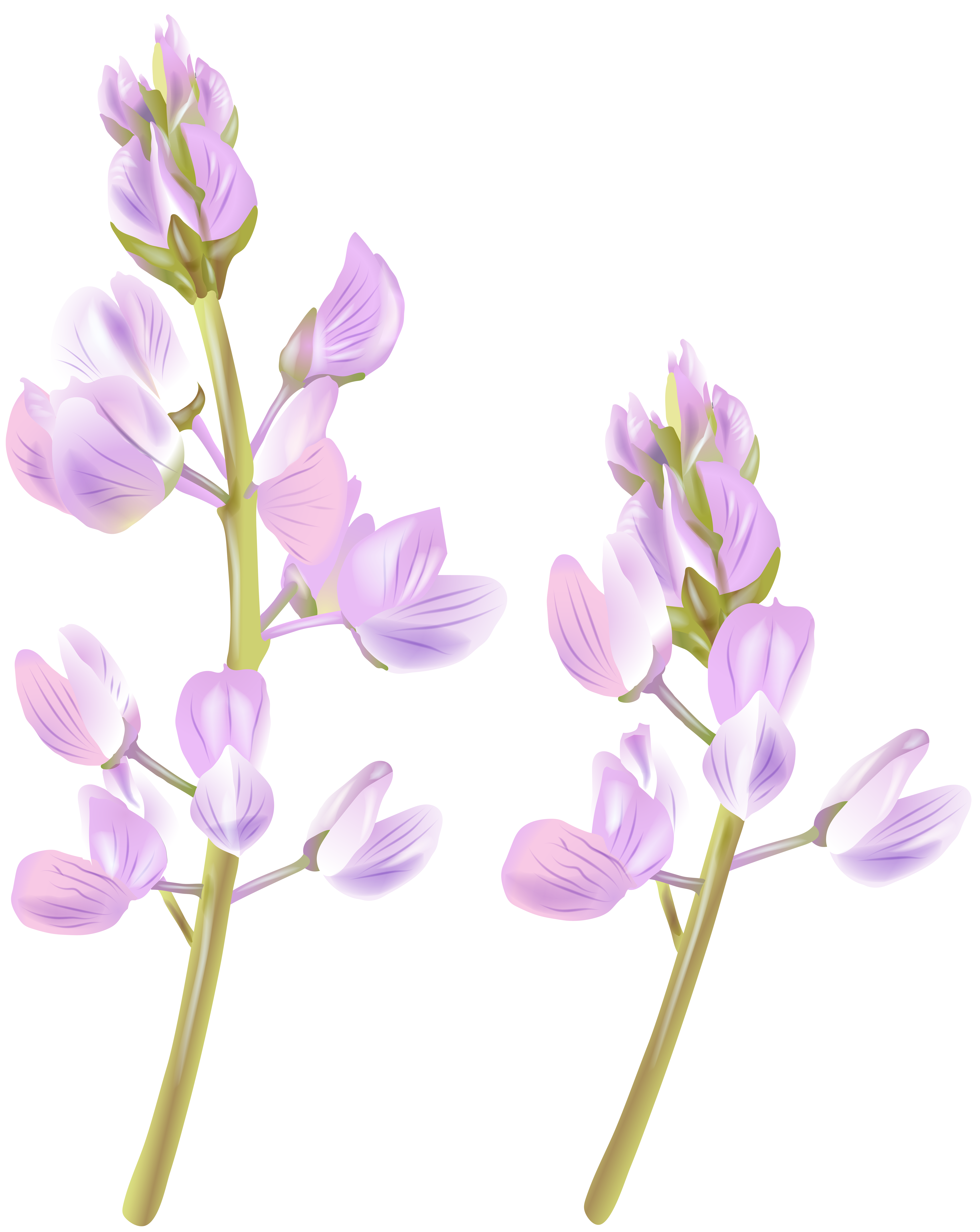 Wildflower PNG Clip Art Image.