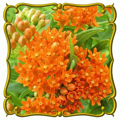 1000+ ideas about Wildflower Seeds on Pinterest.