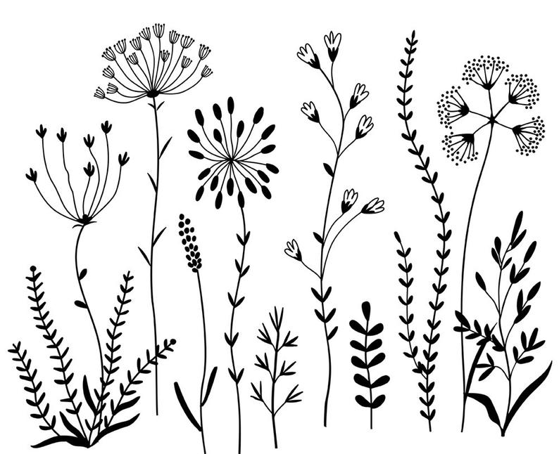 Wildflowers Clipart and Stamps. Digital Clipart. Clip Art Flowers. Digital  brushes. Digital Graphics..