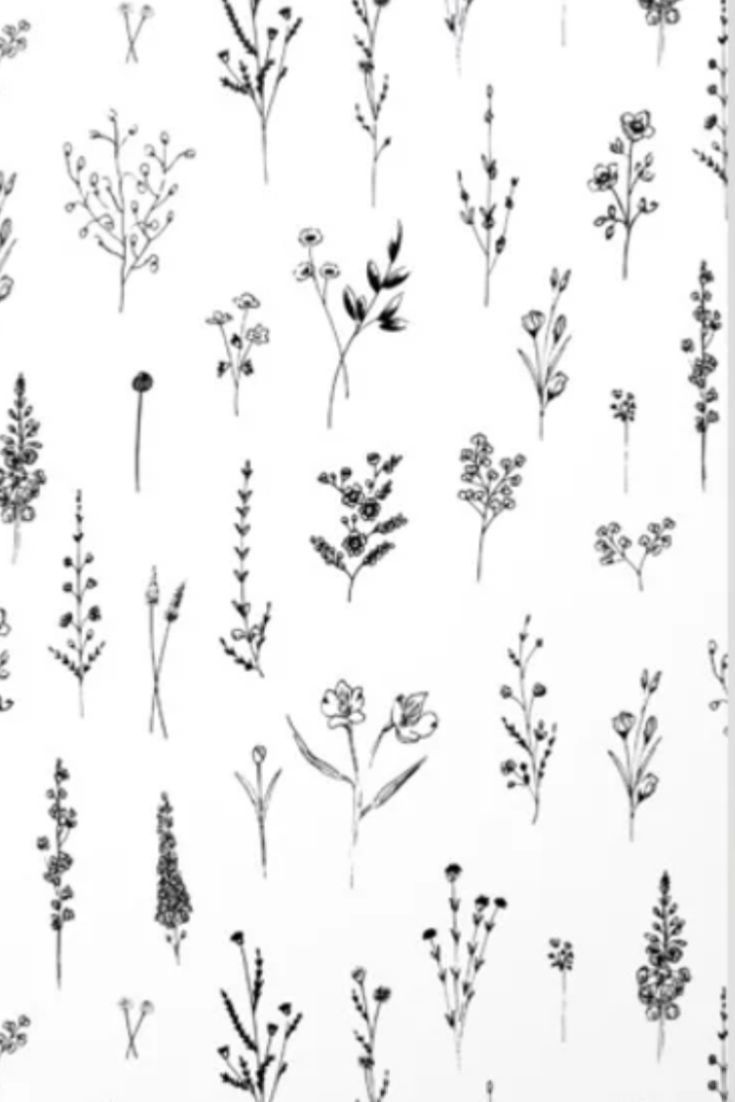 Wildflower illustration inspiration. Simple black and white.