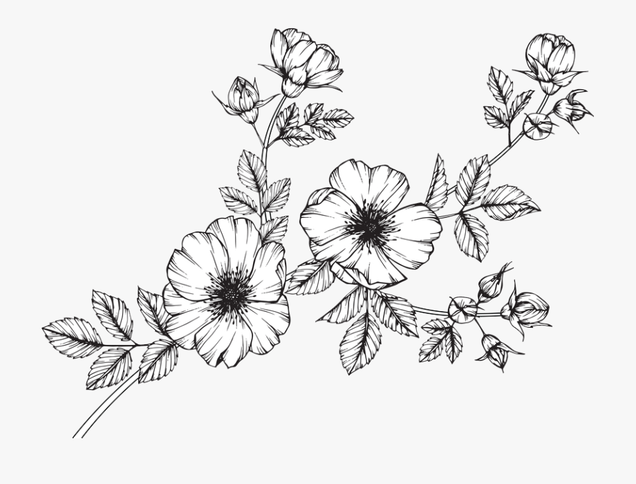 Collection Of Free Wildflowers Minimalist Download.
