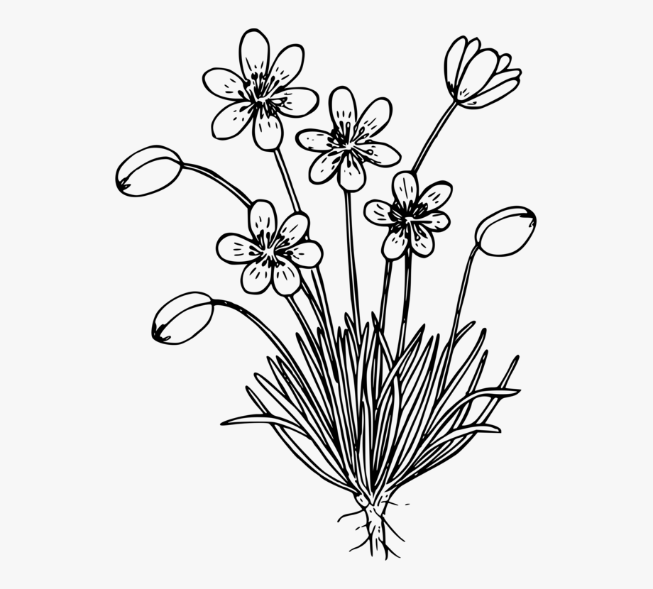 Wild Flower Black And White, Cliparts & Cartoons.