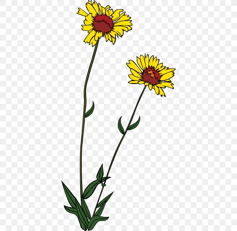 Wildflower Clip Art, PNG, 800x800px, Wildflower, Annual.