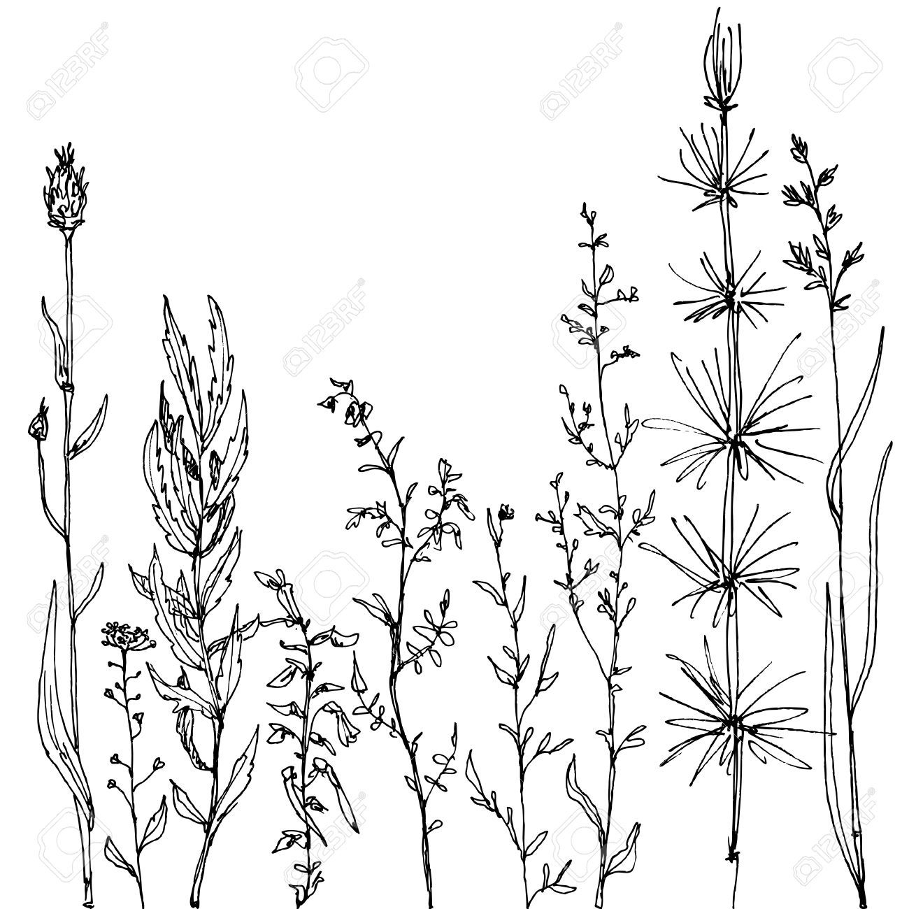 wild flower: floral composition with ink drawing herbs and.