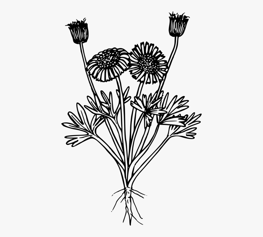 Wildflower Flora Flowering Plant Computer Icons.