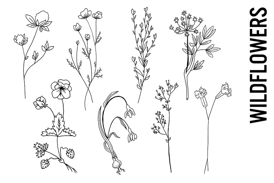 Wildflower Doodle Clipart PNGs.