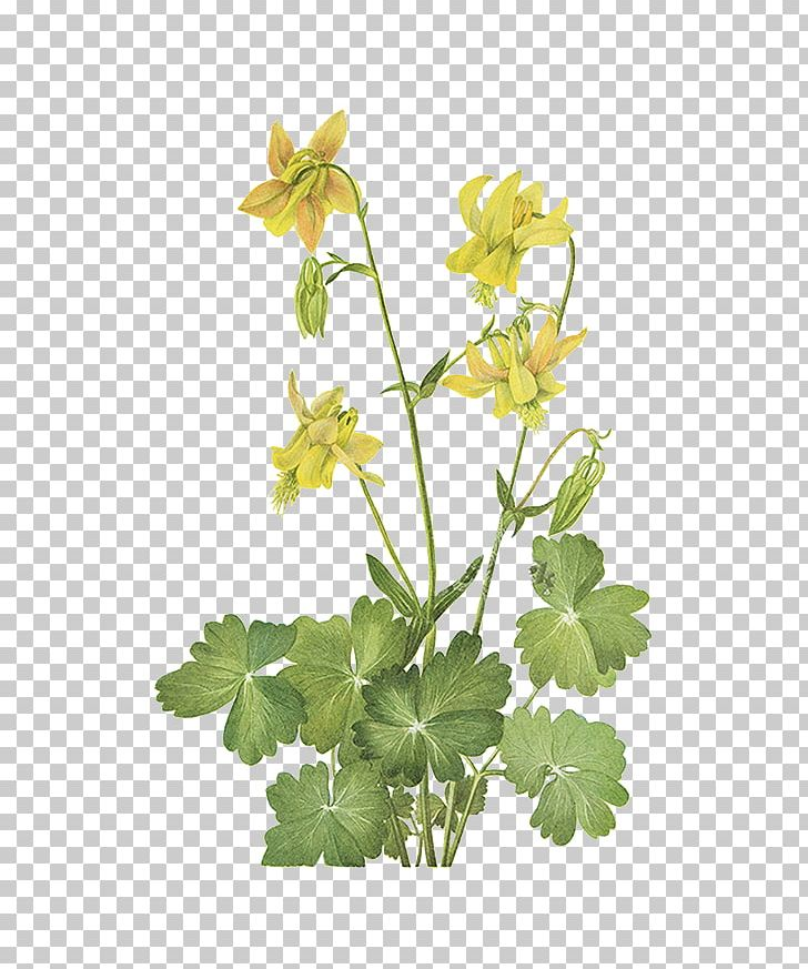 China Wild Flowers Of America Yellow Wildflowers Of The Pacific.
