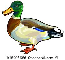 Wildfowl Clipart EPS Images. 98 wildfowl clip art vector.