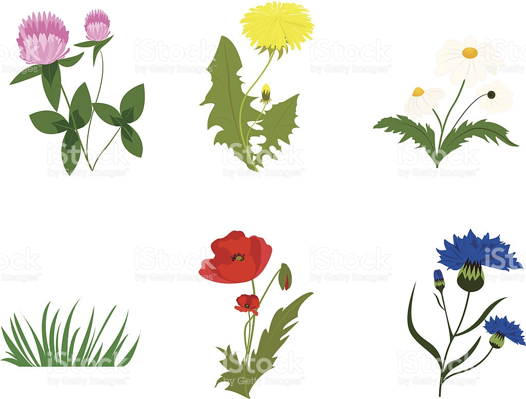 Wild Blume Sortiment Vektor Illustration 165655064.