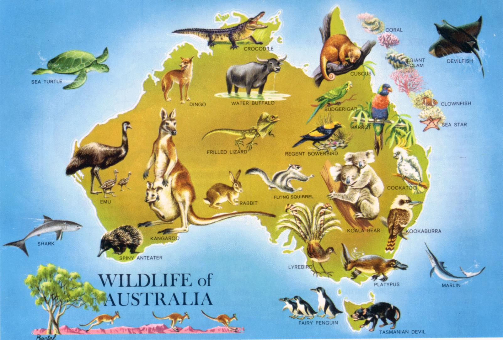 Large detailed wildlife map of Australia. Australia large detailed.