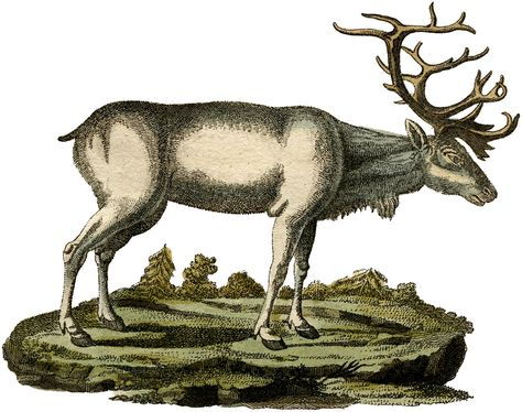 12+ Deer and Antlers Clipart.