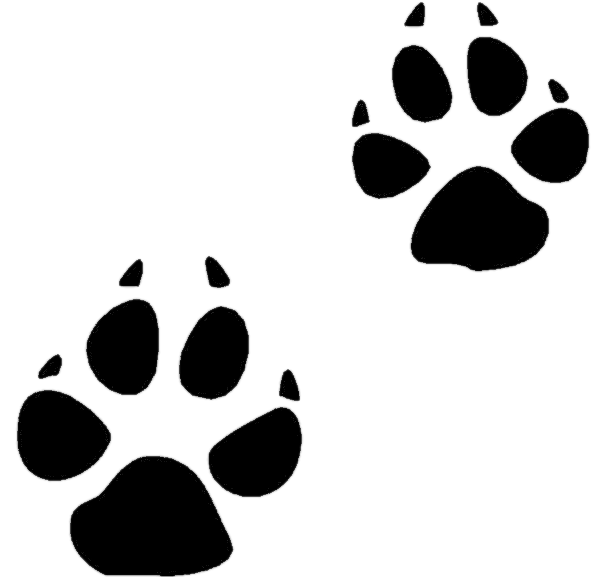 Animal track Tracking Footprint Clip art.