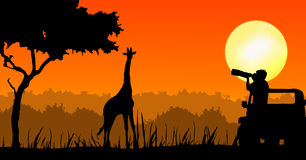 Wildlife Photographer Stock Illustrations.