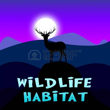 3,409 Wildlife Reserve Stock Vector Illustration And Royalty Free.