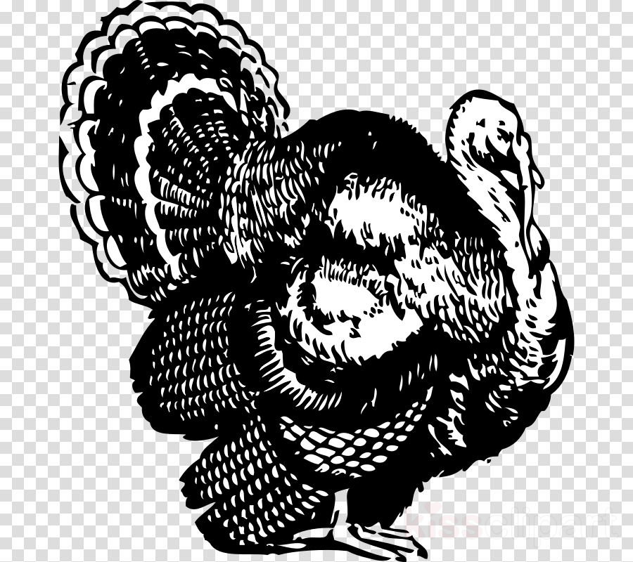 Thanksgiving Turkey Drawing clipart.