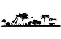Wildlife Stock Illustrations.
