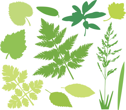 Wildplant Clip Art, Vector Images & Illustrations.