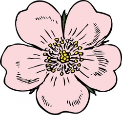 Wild Rose, vector images.