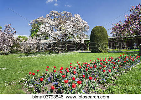"Stock Images of ""Magnolia blossom in the Moorish Garden, Wilhelma."