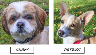 This Week's Featured Adoptable Dogs @ Willamette Humane Society by.
