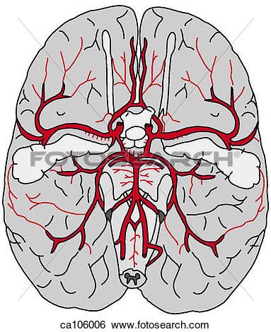 Stock Illustration of Brain, base with arteries/Circle of Willis.