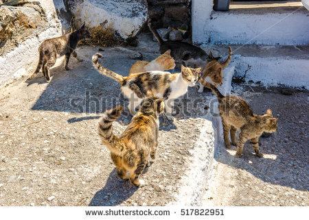 Herding Cats Stock Photos, Royalty.