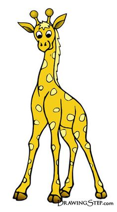 type of tree for Giraffe to be eating.
